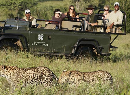 wildlife-safari